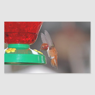 Flying Hummingbird and Hummingbird Feeder Rectangular Sticker