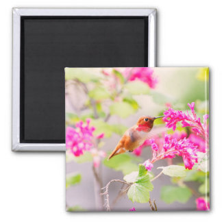 Flying Hummingbird and Red Currant Flowers Magnet