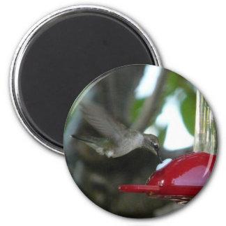 flying hummingbird refrigerator magnet