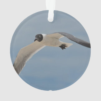 Flying Laughing Gull