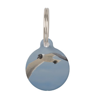 Flying Laughing Gull Pet Name Tags