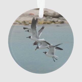 Flying Laughing Gulls