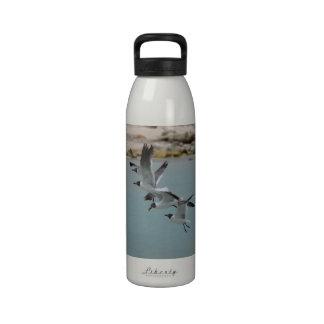 Flying Laughing Gulls Reusable Water Bottles