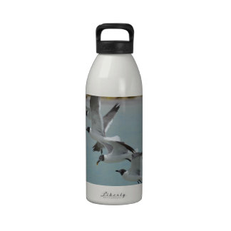 Flying Laughing Gulls Water Bottle