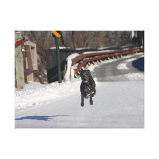 Flying Lurcher Canvas | Female Lurcher Dog