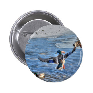 Flying Mallard Drake Wildlife Gift Button