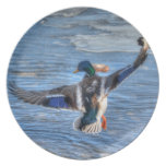 Flying Mallard Drake Wildlife Gift Dinner Plates