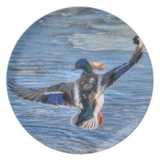 Flying Mallard Drake Wildlife Gift Melamine Plate