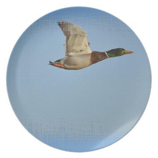Flying Mallard Duck Art for Wildlife lovers Plates
