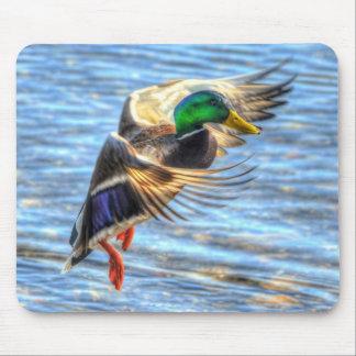 Flying Mallard Duck Birdlover Wildlife Photo Mouse Pad