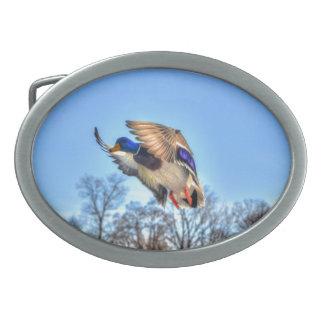 Flying Mallard Duck Drake Wildlife Photo Belt Buckle