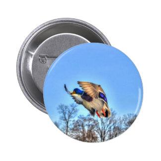 Flying Mallard Duck Drake Wildlife Photo Pinback Buttons