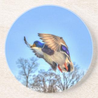 Flying Mallard Duck Drake Wildlife Photo Drink Coaster
