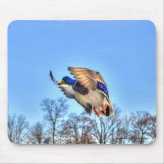 Flying Mallard Duck Drake Wildlife Photo Mouse Pad