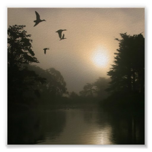 Flying Mallards and Morning Fog Posters