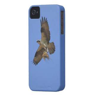 Flying Osprey (Fish Hawk) iPhone Case Case-Mate iPhone 4 Cases