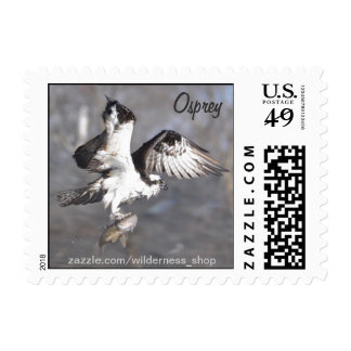 Flying Osprey & Fish Wildlife Photo Scene Postage