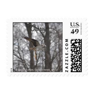 Flying Osprey & Fish Wildlife Photo Scene Postage