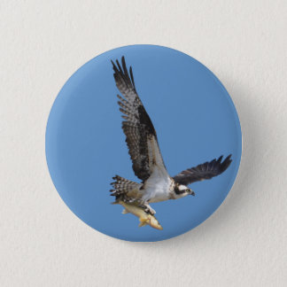 Flying Osprey & Fish Wildlife Photography Pinback Button