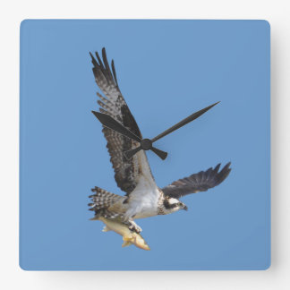 Flying Osprey & Fish Wildlife Photography Square Wall Clock