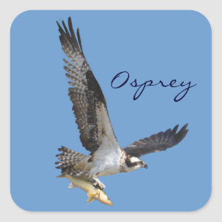 Flying Osprey & Fish Wildlife Photography Square Stickers