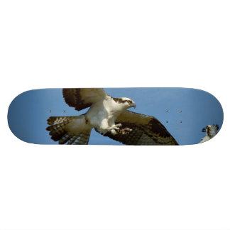 Flying Osprey hawks Skate Board