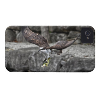 Flying Osprey Hunting for Fish Case-Mate iPhone 4 Case