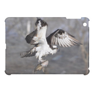 Flying Osprey Hunting for Fish iPad Mini Covers