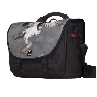 Flying Osprey Hunting for Fish Computer Bag