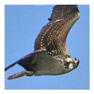 Flying Osprey Invitations