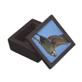 Flying Osprey Premium Gift Box