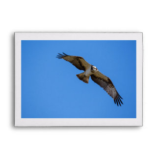 Flying osprey with a target in sight envelope