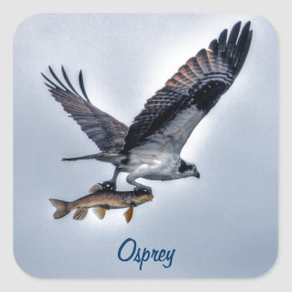 Flying Osprey with Walleye Fish HDR Photo Stickers