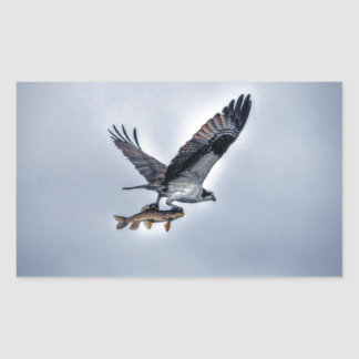 Flying Osprey with Walleye Fish HDR Photo Rectangle Stickers