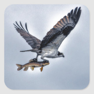 Flying Osprey with Walleye Fish HDR Photo Sticker