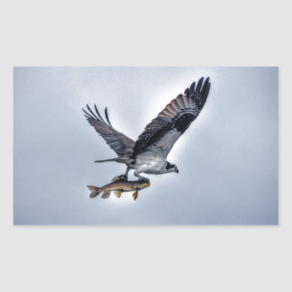 Flying Osprey with Walleye Fishing HDR Photo Stickers