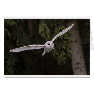 Flying owl card