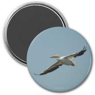 Flying Pelican Magnet 4