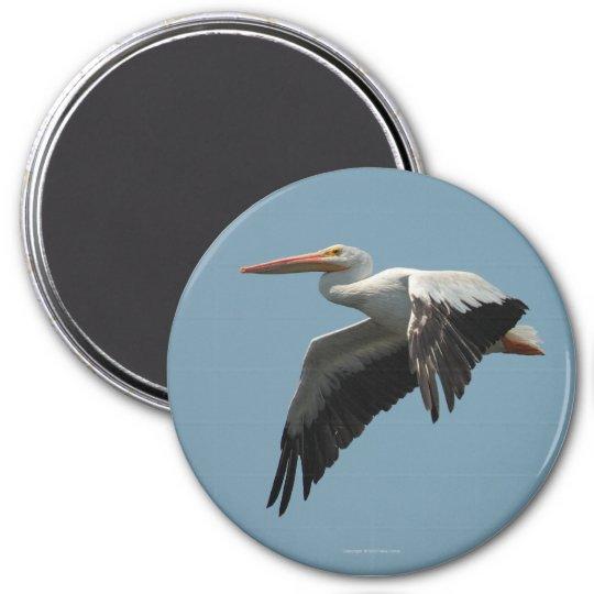 Flying Pelican Magnet 5