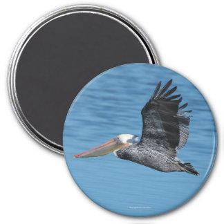 Flying Pelican Magnet 8