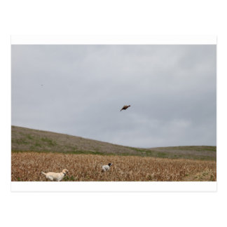 flying pheasant postcard