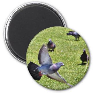 Flying Pigeon 2 Inch Round Magnet