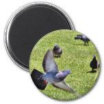 Flying Pigeon Refrigerator Magnet