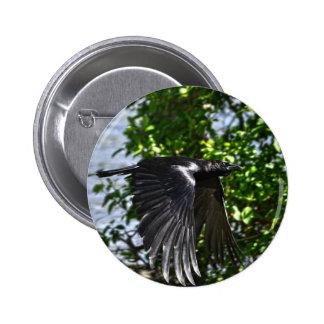 Flying Raven in Sunlight Wildlife Photo Button