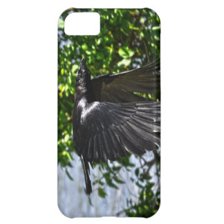 Flying Raven in Sunlight Wildlife Photo Case For iPhone 5C