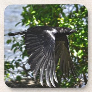 Flying Raven in Sunlight Wildlife Photo Coaster