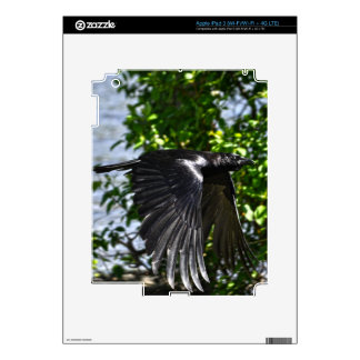 Flying Raven in Sunlight Wildlife Photo Decals For iPad 3