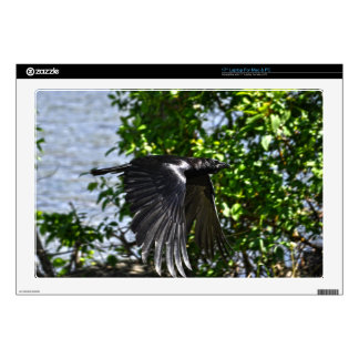 Flying Raven in Sunlight Wildlife Photo Decals For Laptops