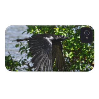 Flying Raven in Sunlight Wildlife Photo iPhone 4 Cover