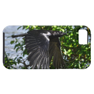 Flying Raven in Sunlight Wildlife Photo iPhone SE/5/5s Case